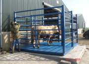 Affordable Cattle Farm Weight Weighing Scales in East Africa