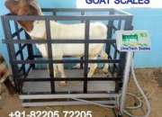 Reliable goat- and sheep weighing scales in east africa
